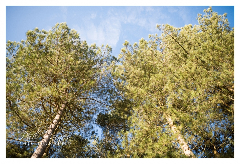 thetford forest trees photograph