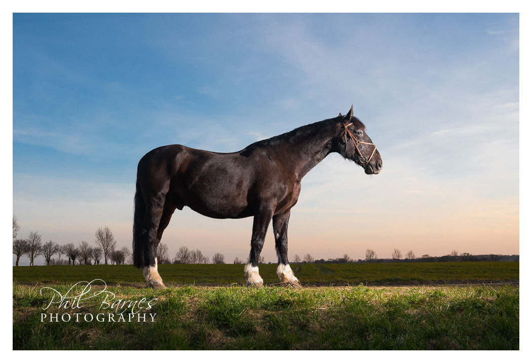 NORFOLK HORSE PHOTOGRAPHY